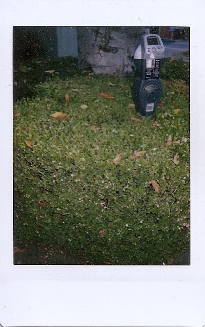 parking meter hedge sacramento